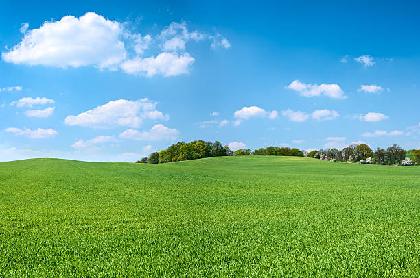 spring panorama 46mpix xxxxl - meadow, blue sky, clouds - hill stock pictures, royalty-free photos & images