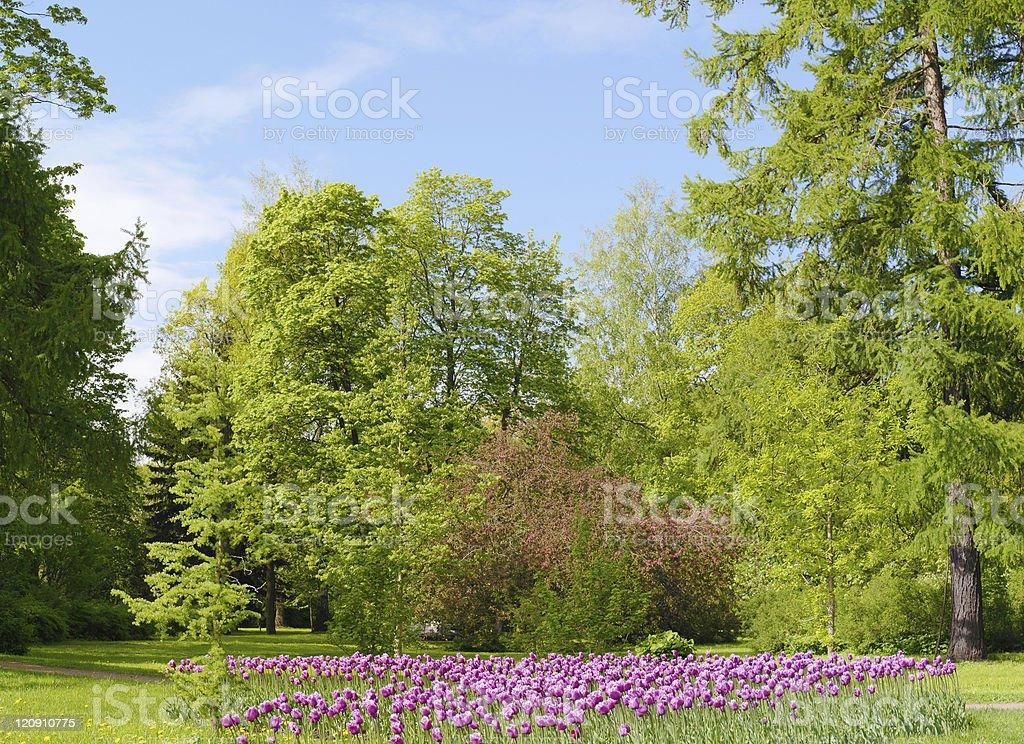 Spring park royalty-free stock photo