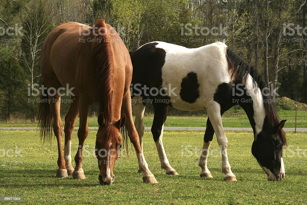 Spring Pasture royalty-free stock photo
