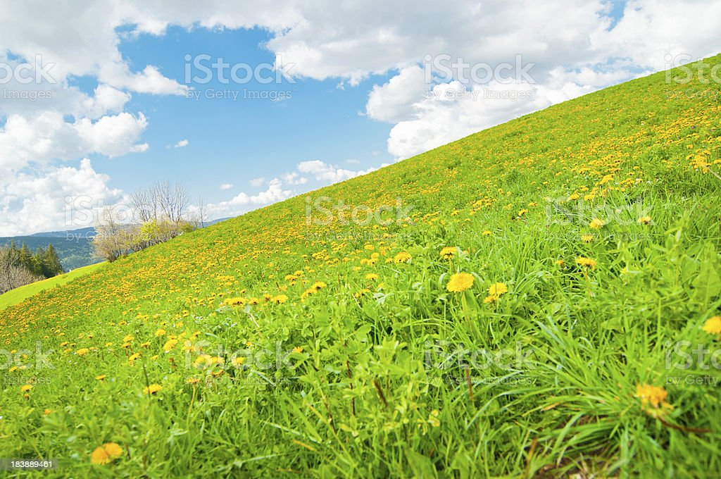 Spring Peaceful Landscape royalty-free stock photo