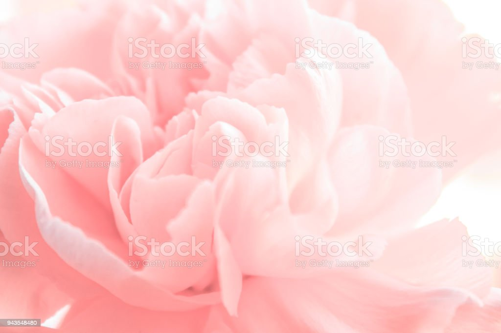 весенний пион royalty-free stock photo