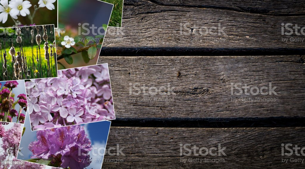 spring photo collage stock photo