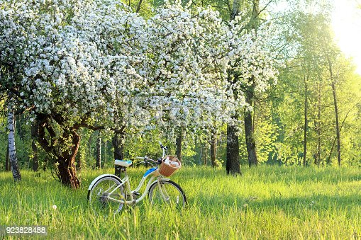 bicycle with a book, a bottle and pastries in a basket, under a flowering fruit tree in the park