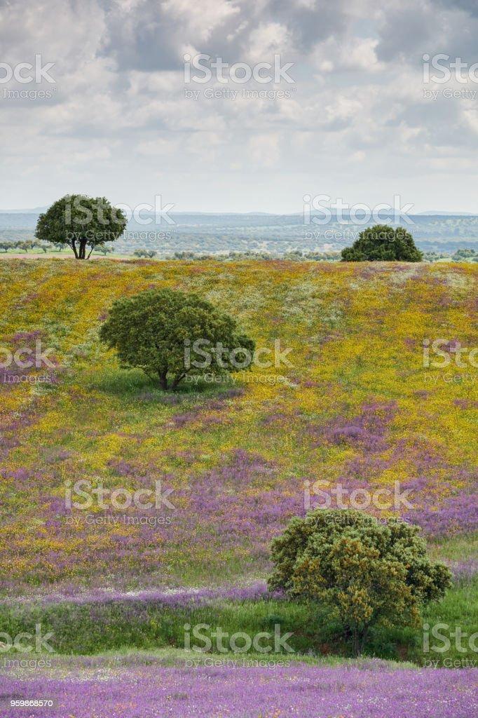 Picnic de primavera de margaritas de blanco fresco, lavanda, multifloral natural paisaje panorámico - foto de stock