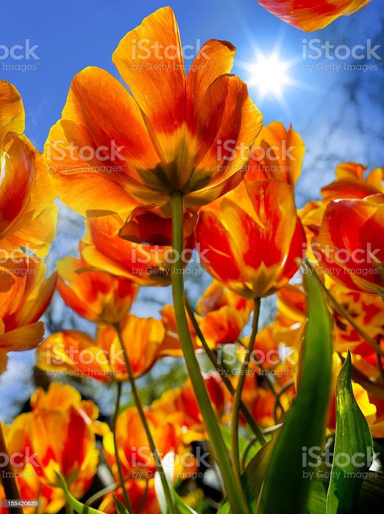 Spring royalty-free stock photo