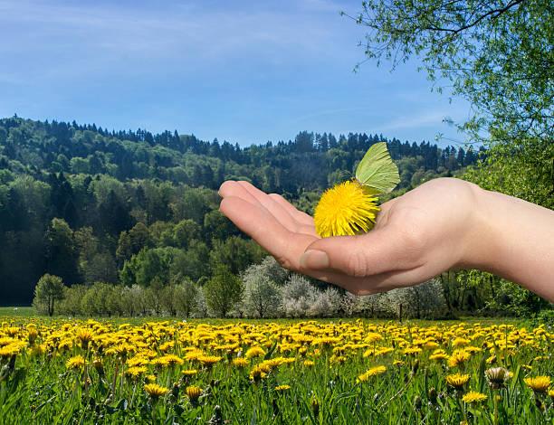 Den Frühling – Foto