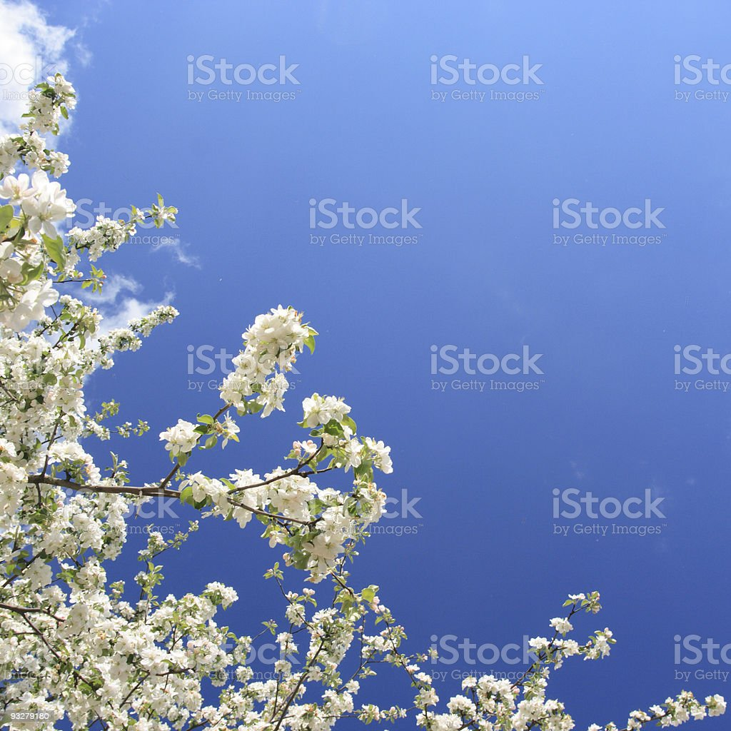 Spring. stock photo