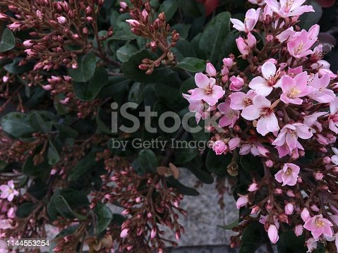 istock Spring pink flowers blossom background 1144553254
