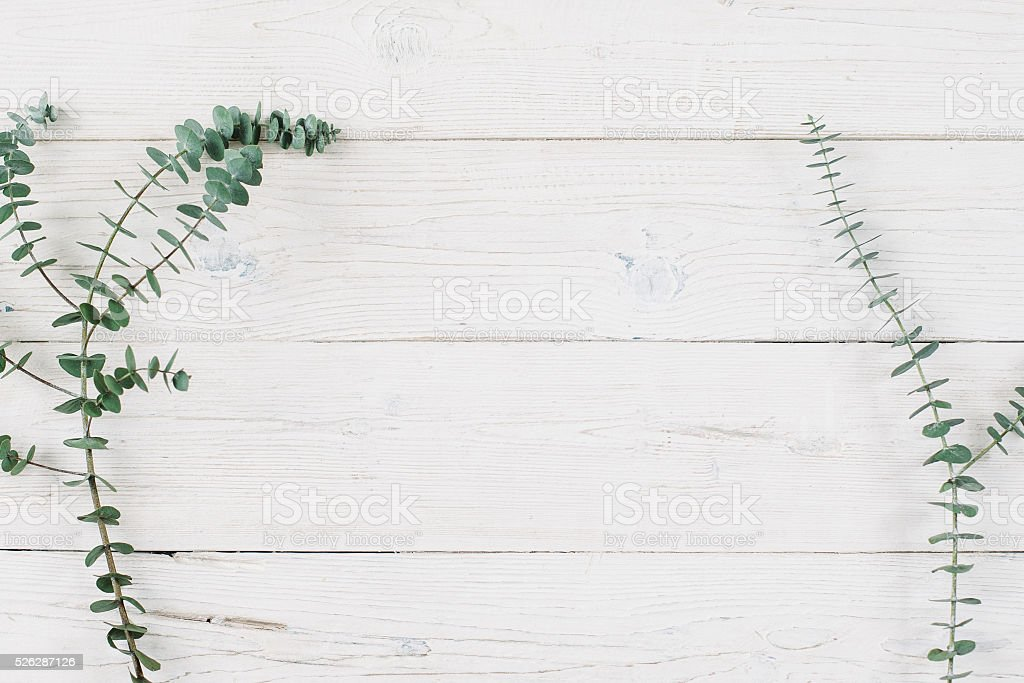 Spring plant over white wooden background. stock photo