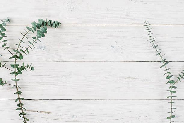 frühling pflanzen auf weißer hölzerner hintergrund. - holzblumen stock-fotos und bilder