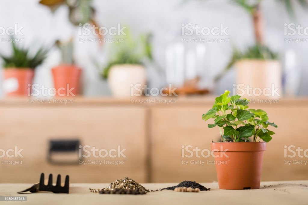 Spring Plant Repotting Indoor Garden Tool Replant Stock Photo Download Image Now Istock