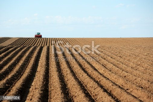 Planting potatoes in a field.  Focus in on the freshly planted rows.