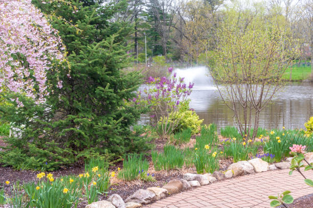 Spring plants in bloom near a fountain stock photo