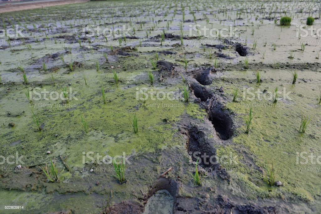 Spring ploughing is in full swing . stock photo