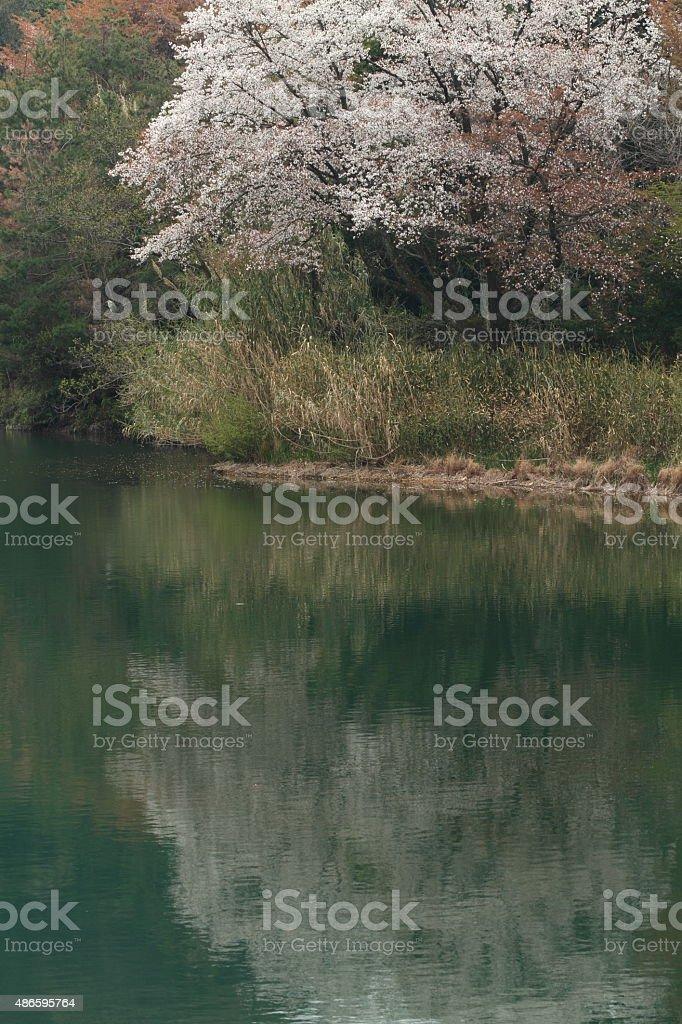 スプリングの池 ロイヤリティフリーストックフォト