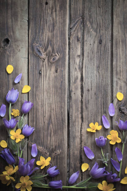 spring purple and yellow  flowers on old wooden background stock photo