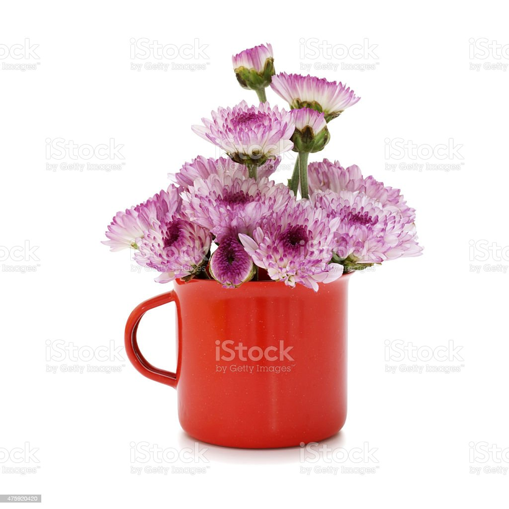 Spring purple flower in small cups cute stock photo