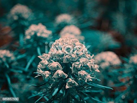 Close up photo of azalea flowers during may.