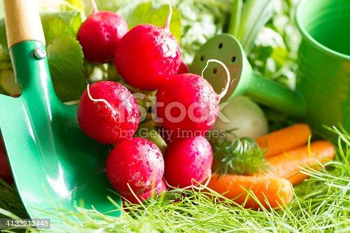 Spring raw fresh organic vegetables harvesting in the garden closeup