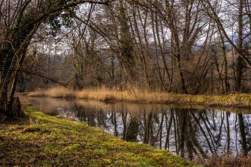 Spring Reflection