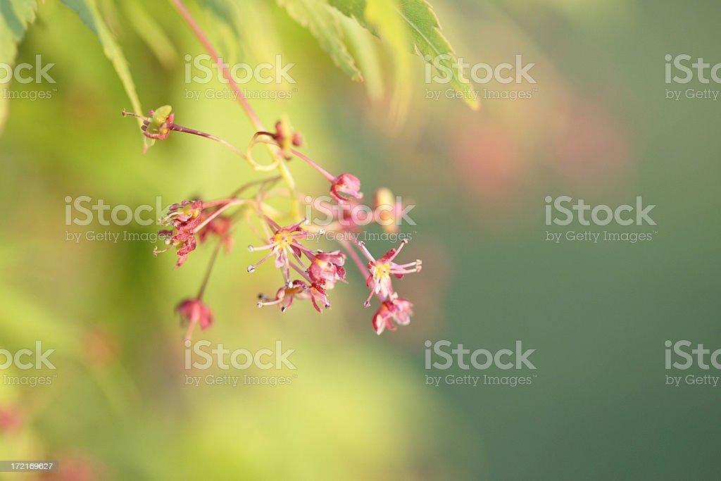 Spring Renewal royalty-free stock photo