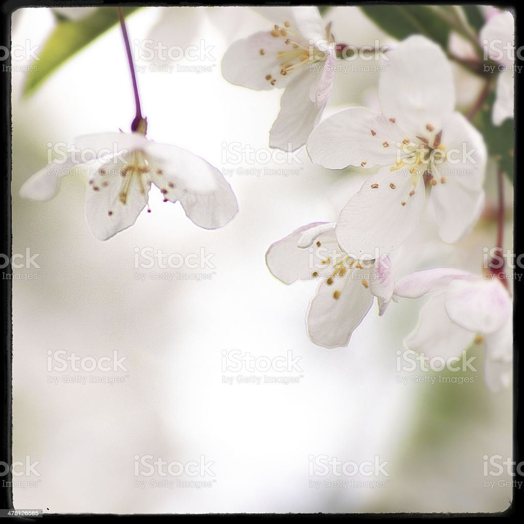 spring retro styled stock photo