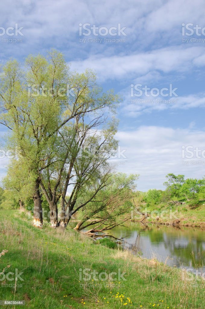 Spring River,, tree grows in the spring sunshine. stock photo