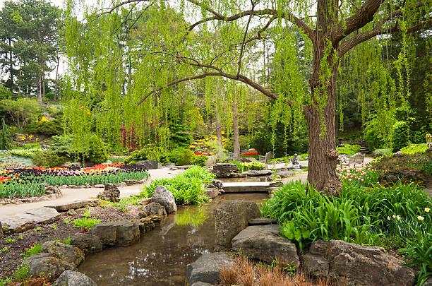 spring rock garden at the rbg - rbg stok fotoğraflar ve resimler