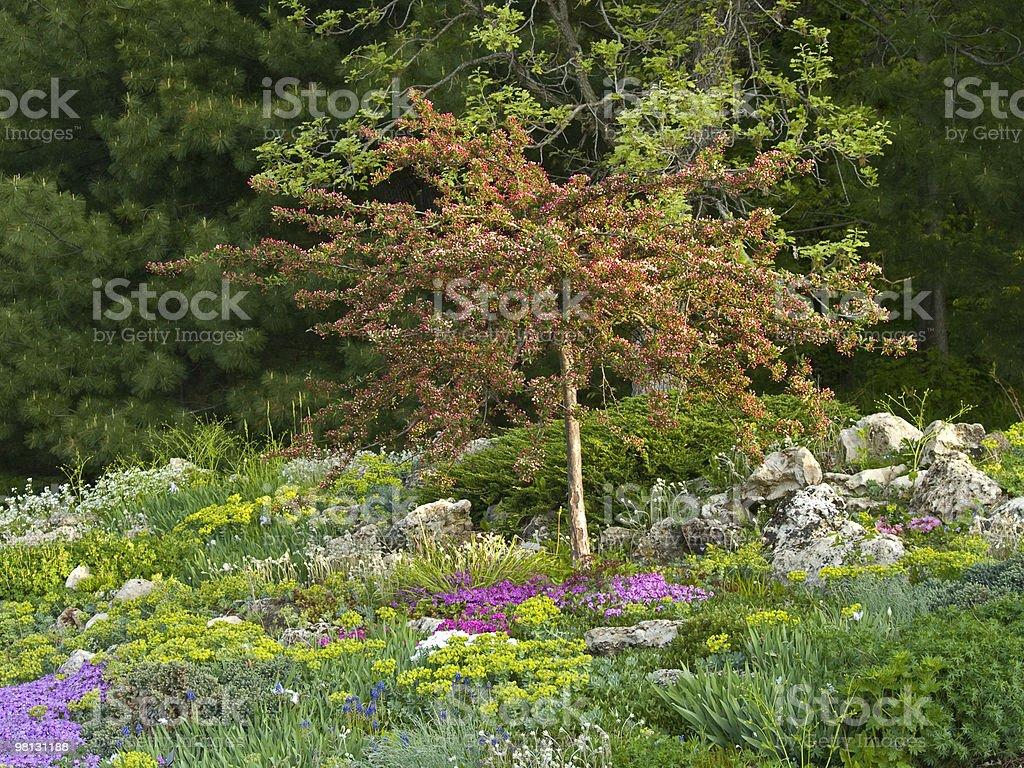 Primavera Rock giardino foto stock royalty-free