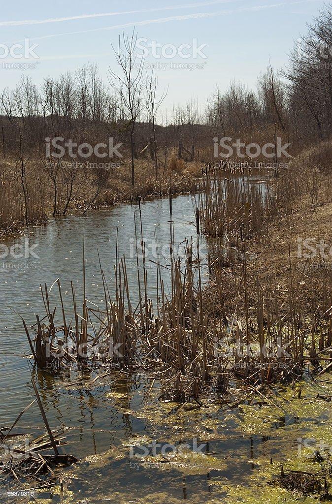 Primavera corsa, Welland foto stock royalty-free