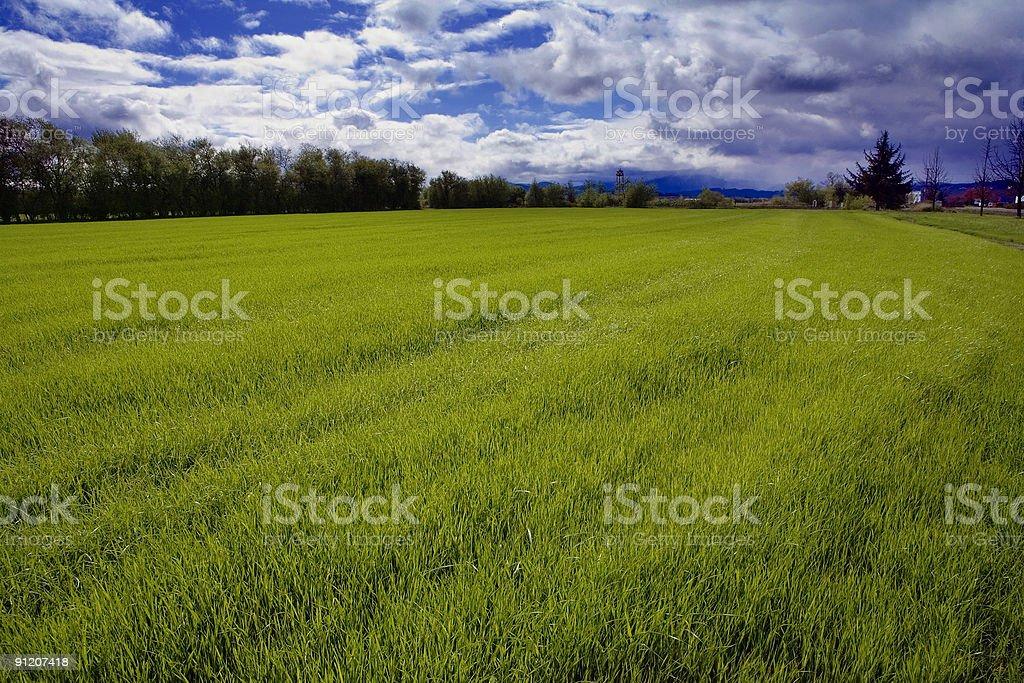 Spring Ryegrass stock photo