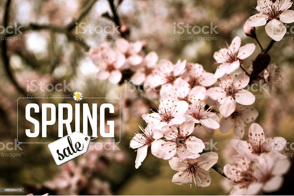 Spring sale Background with cherry blossoms stock photo