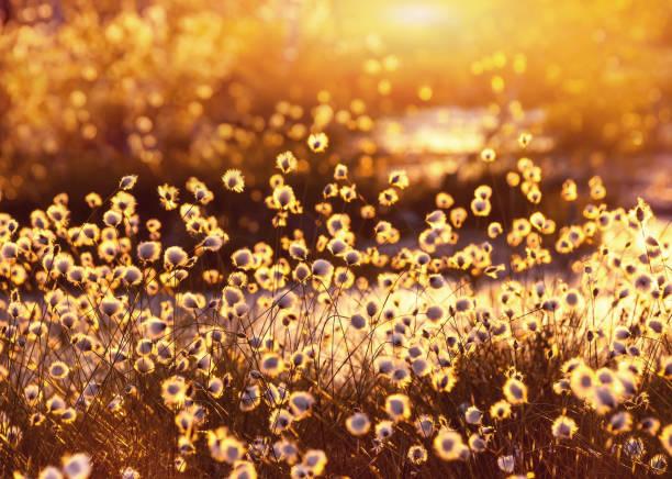 Spring scene. stock photo