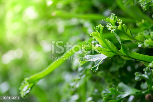 istock Spring scenes of green fern in the garden with abstract green soft nature background and wallpaper 902410924