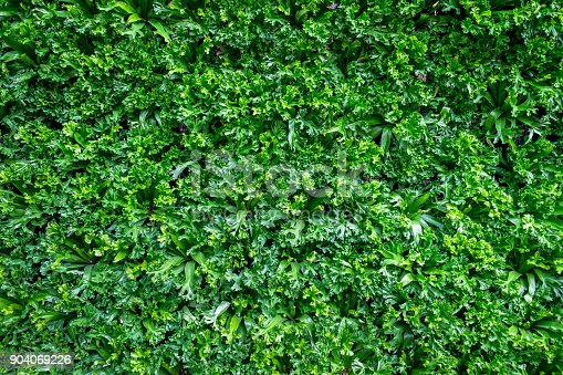 istock Spring scenes of green fern in the garden with abstract green soft nature background and wallpaper 904069226