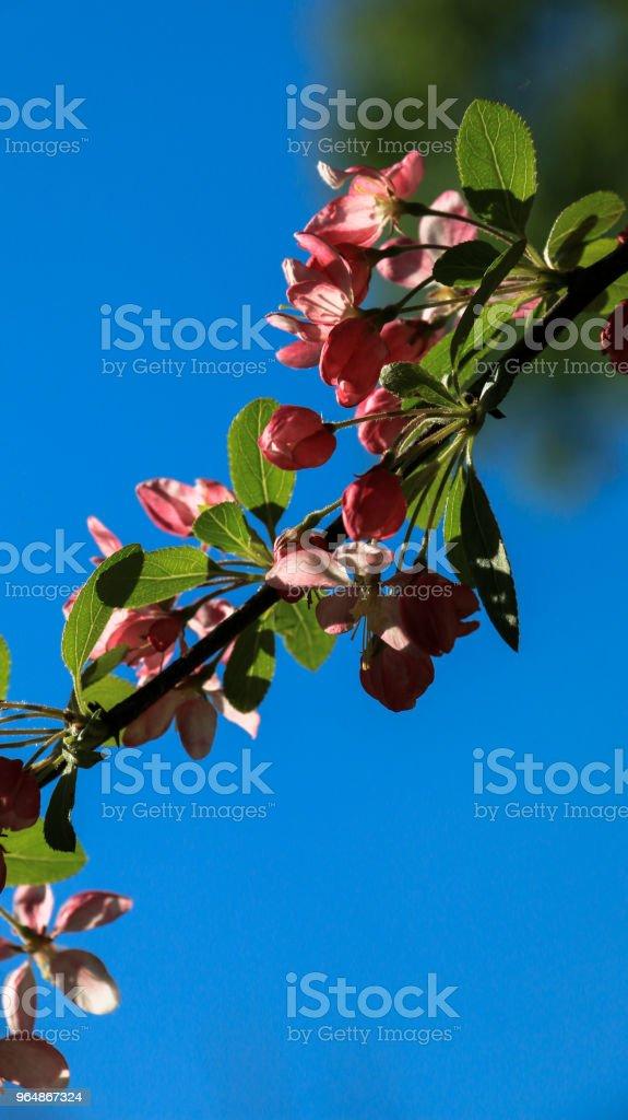 Spring season royalty-free stock photo