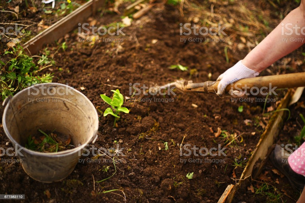spring seedbed with iron bin and hand with shovel stock photo