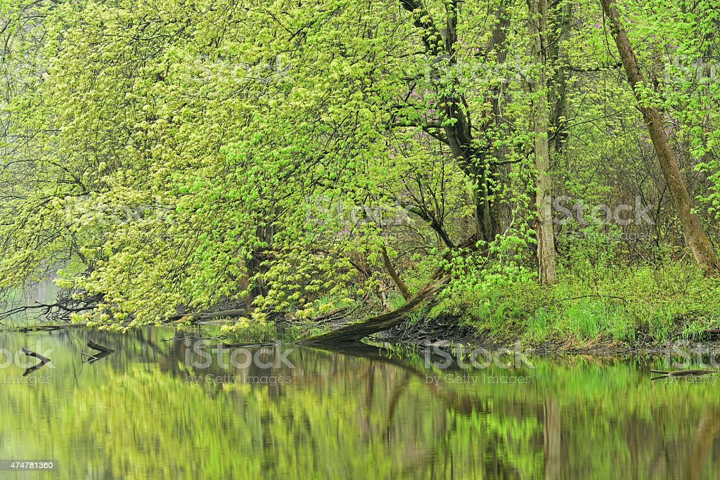 Spring Shoreline Kalamazoo River stock photo