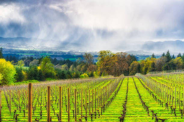 Spring showers in the Vineyards of Yamhill County stock photo