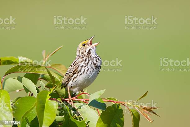 Photo of Spring Sing
