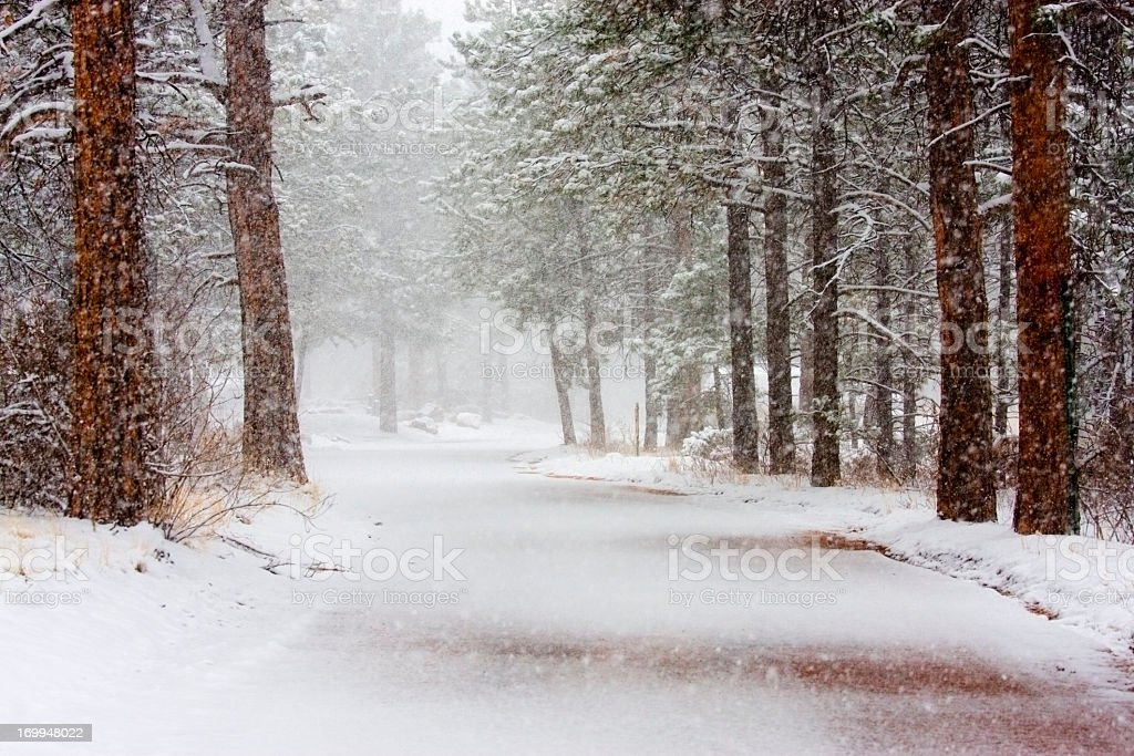 Spring Snow in the Pike National Forest Colorado stock photo