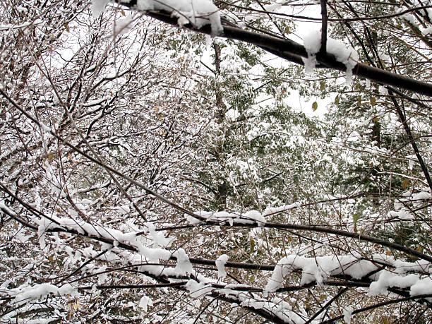 Spring Snow stock photo