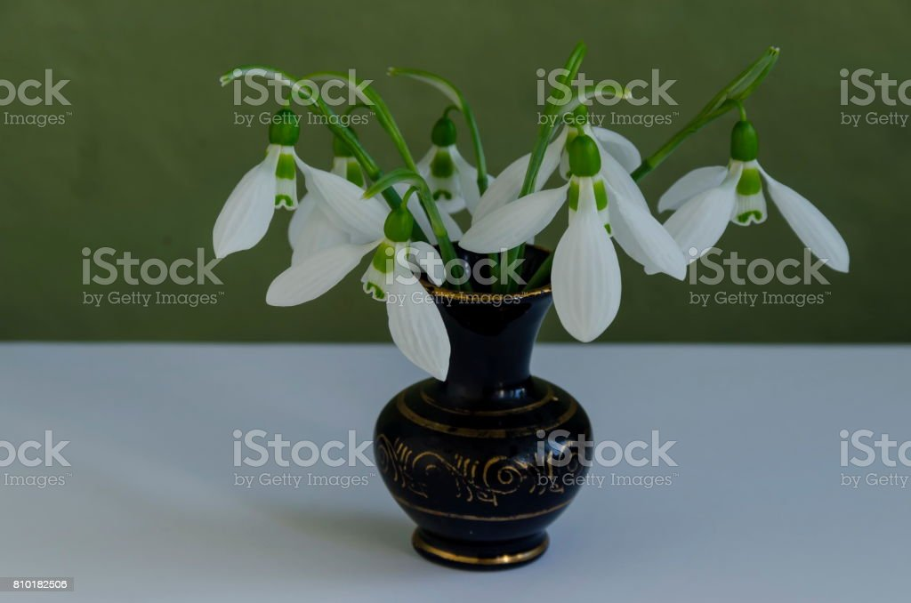 Spring snowdrop flower bouquet in porcelain vase at light background stock photo