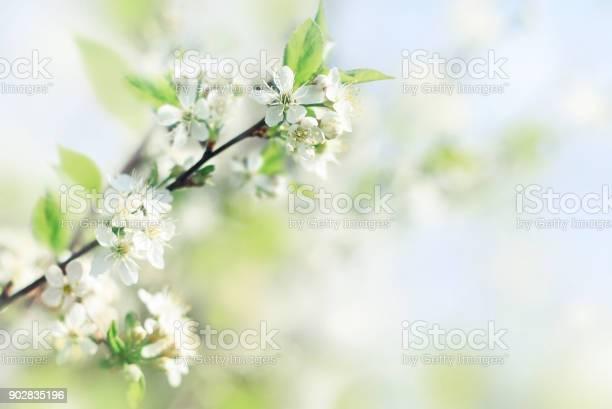 Spring soft background with fresh apple blossom flowers picture id902835196?b=1&k=6&m=902835196&s=612x612&h=cn2bf8pd7thwvkehx8aixosfml jbuxpiqbrc1q2yms=