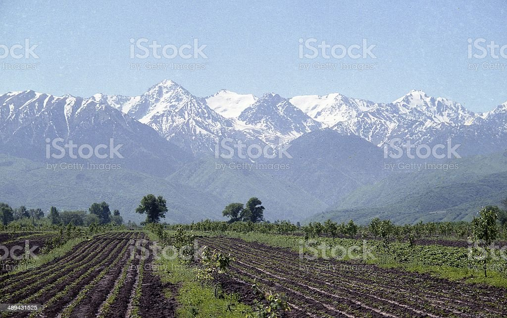 Spring Sowing near to Alatau Mountains stock photo