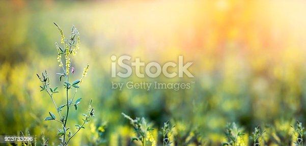 istock Spring, springtime banner 923733096