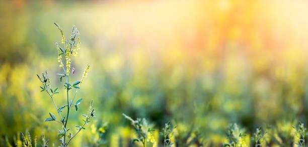spring, springtime banner - pyłek zdjęcia i obrazy z banku zdjęć