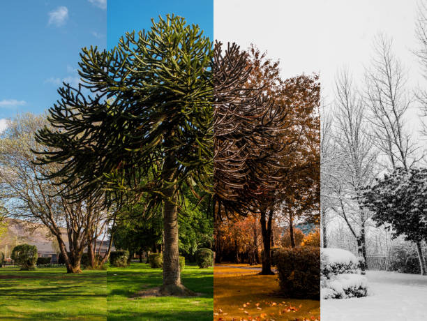 Spring, Summer, Fall and Winter. Spring, Summer, Fall and Winter. Four seasons photographed in the same park, from the exact same location, in Blaina, South Wales UK. four seasons stock pictures, royalty-free photos & images