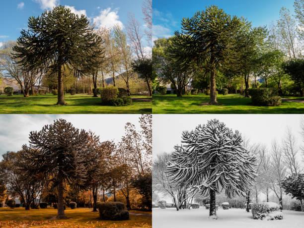 spring, summer, fall and winter. - four seasons zdjęcia i obrazy z banku zdjęć