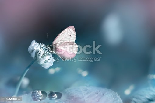 Spring summer natural background. Pink delicate butterfly and white clover flowers in a fantastic garden. Pastel tone.